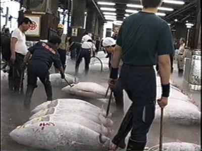 Allan Sekula, Tsukiji